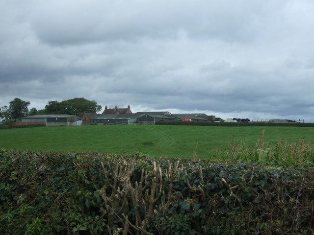 Grazing towards Loxley Bank Farm