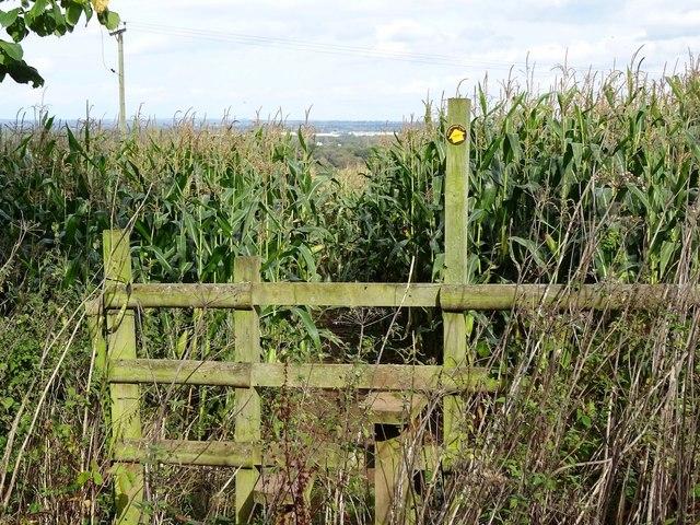 Footpath through the corn on Hanbury Hill