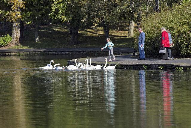 Feeding swans at Gun Knowe Loch