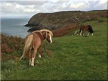 SM9040 : Wild horses by Alan Hughes