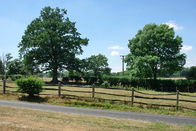 Trees near drive to Stumblehole
