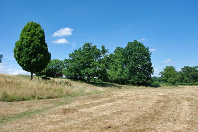 Mown meadow, Mole valley