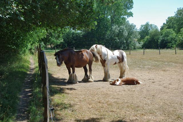 Horses and foal, Denshot Farm