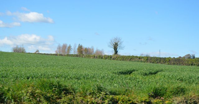Field and hedge by A38