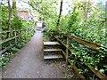 SJ9687 : Path through Barlow Wood by Gerald England