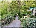 SJ9687 : Bridleway through Barlow Wood by Gerald England