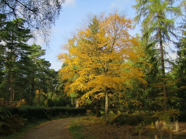 Autumnal tree, Bedgebury Forest