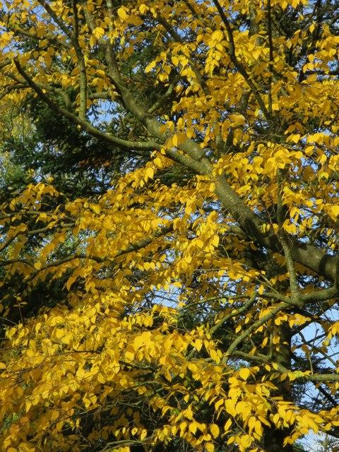 Autumnal tree, Bedgebury Forest