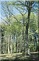 SP0682 : Woodland near Moor Green, 2001 by Derek Harper