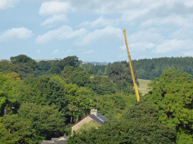 The yellow crane