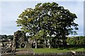 NZ0416 : Barnard Castle: Trees growing on the site of the kitchen range by Bob Harvey