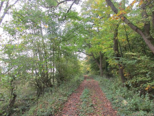 Bridleway alongside Markham Belt