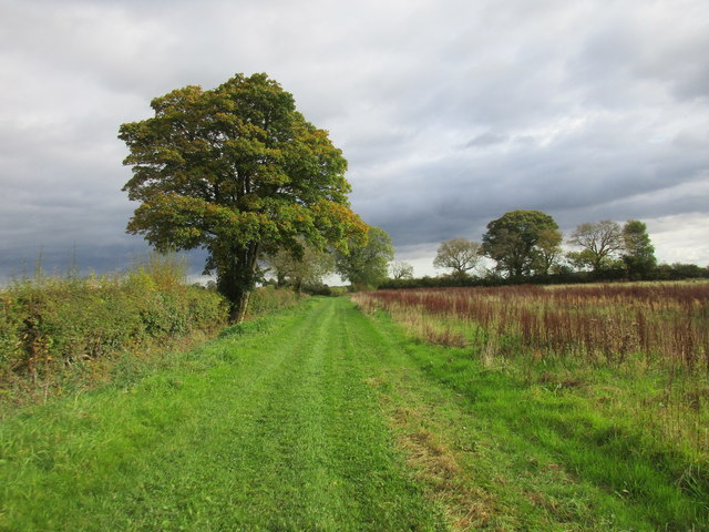 The other side of the hedge from the bridleway