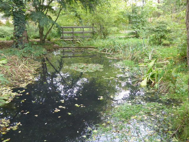 The Japanese water garden in Trent Park