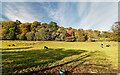 NH6955 : Rosehaugh Estate by valenta