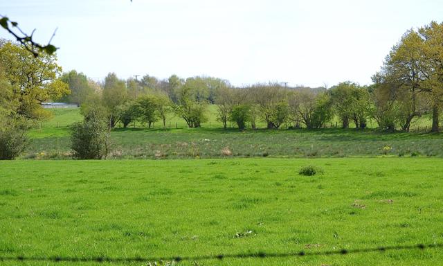 Rushy ground east of Chadwick Lane