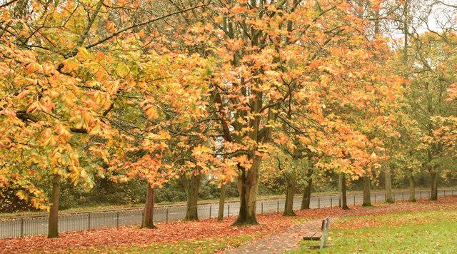 Autumn trees, Holywood (October 2017)