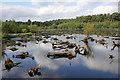 SJ5471 : Blakemere Moss, Delamere Forest Park by Jeff Buck