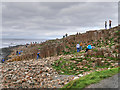 C9444 : The Giant's Causeway by David Dixon