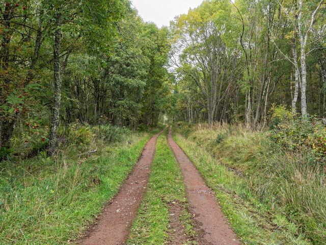 Track through Craigiehowe