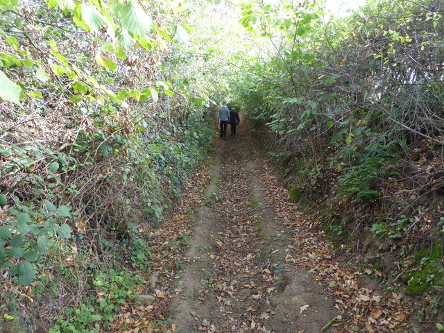 Green sunken way between Bushmoor and Woolston, Shropshire