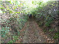 SO4387 : Green sunken way between Bushmoor and Woolston, Shropshire by Jeremy Bolwell
