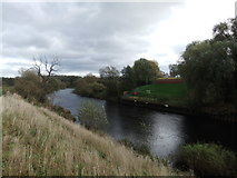 NZ3910 : River Tees by David Brown