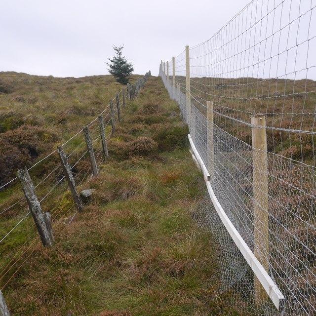 Fences, Mellock Hill
