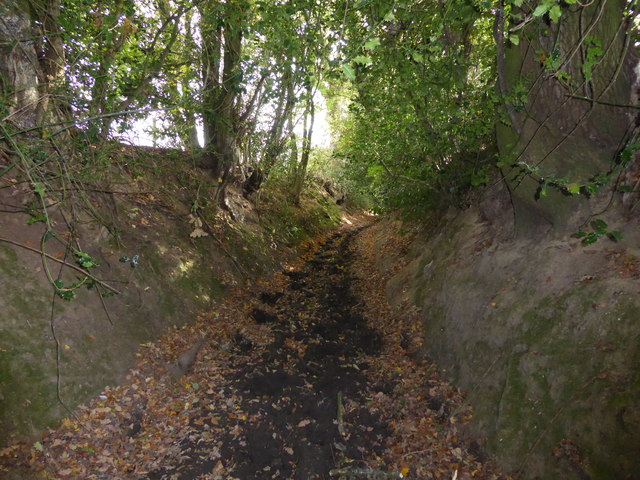 Sunken way near Bushmoor