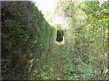 SO4387 : Footpath in Bushmoor by Jeremy Bolwell