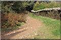 SO1703 : Track alongside Coed y Llanerch by M J Roscoe