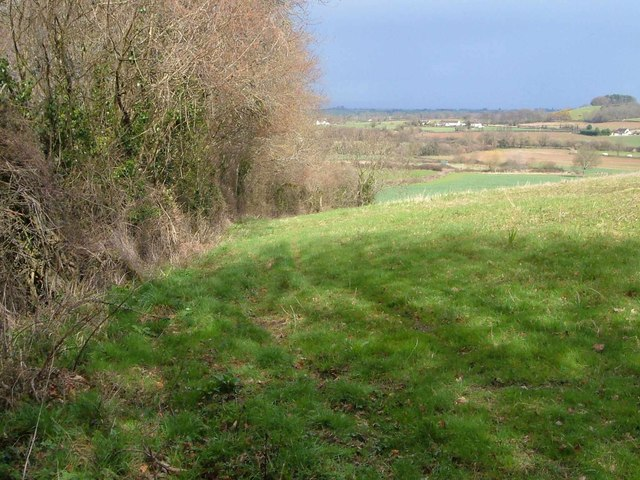 Edge of Henlade Wood