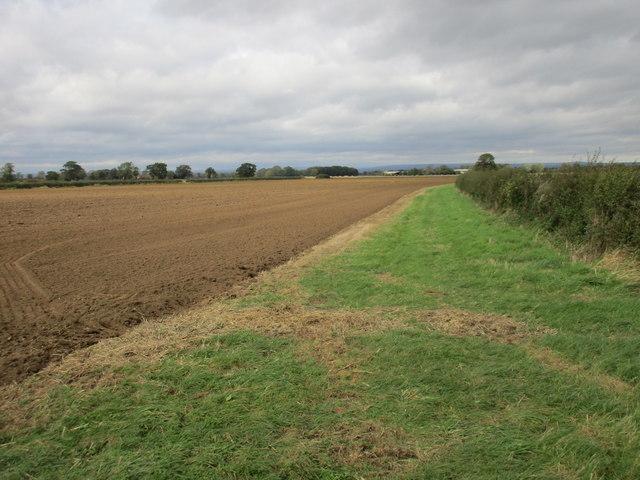 Field margin, Ryton Rigg