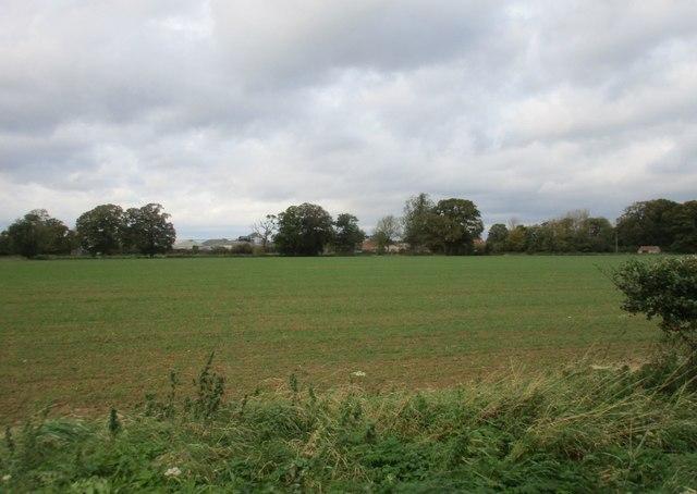 Fields near Great Habton