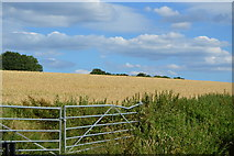 SU8596 : Ripening wheat by N Chadwick