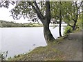 H6501 : The shore of Skeagh Loch Upper by Oliver Dixon