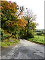 H6700 : Autumn colours at Derrynure by Oliver Dixon