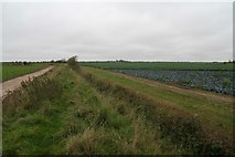 TF3839 : Along the sea bank from North Sea Camp by Chris