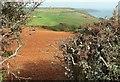 SX9151 : Coastal farmland, Scabbacombe by Derek Harper