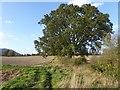 SO7943 : Footpath near Blackmore Park Farm by Philip Halling
