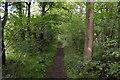 SP9949 : Bridleway, Hanger Wood by N Chadwick