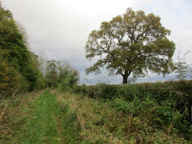 Bridleway (Old Lane) to Riggs Road