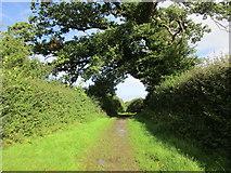 ST5707 : Highford Lane by Jonathan Thacker