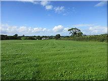 ST5707 : Grass field at Melbury Osmond by Jonathan Thacker
