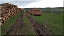 NZ0658 : Log Stacks on Apperley Bank by Clive Nicholson