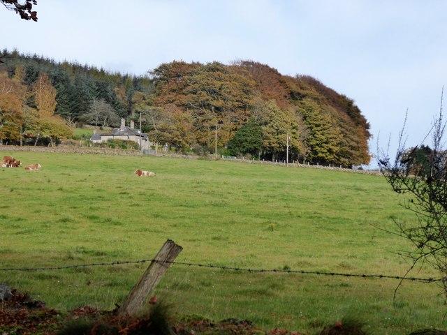 Fontenoy Lodge, Learney