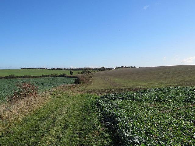 Towards Newnham Hill