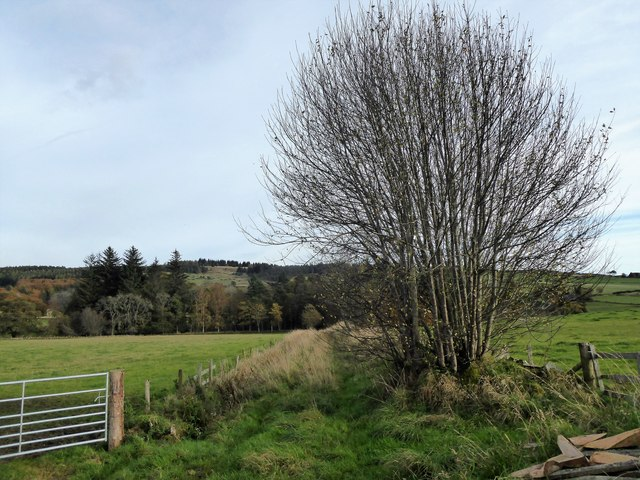 Overgrown (disused) track to Netherlands 'shelter belt' - -