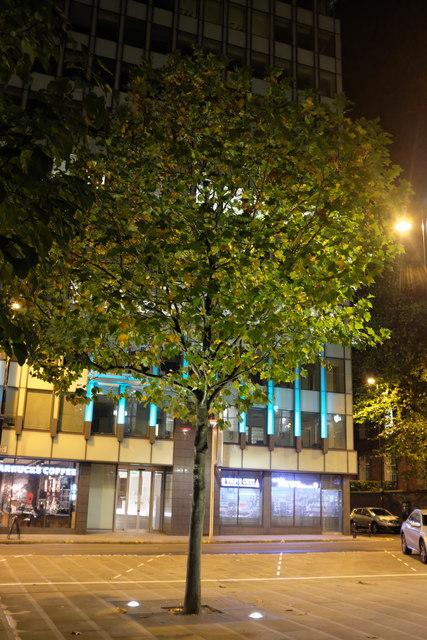 Floodlit tree in Mount Street