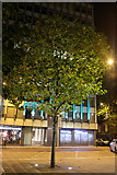 SJ8397 : Floodlit tree in Mount Street by Bob Harvey